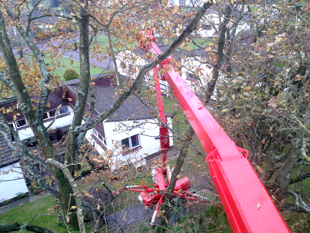 tree pruning kent gardening tree surgery