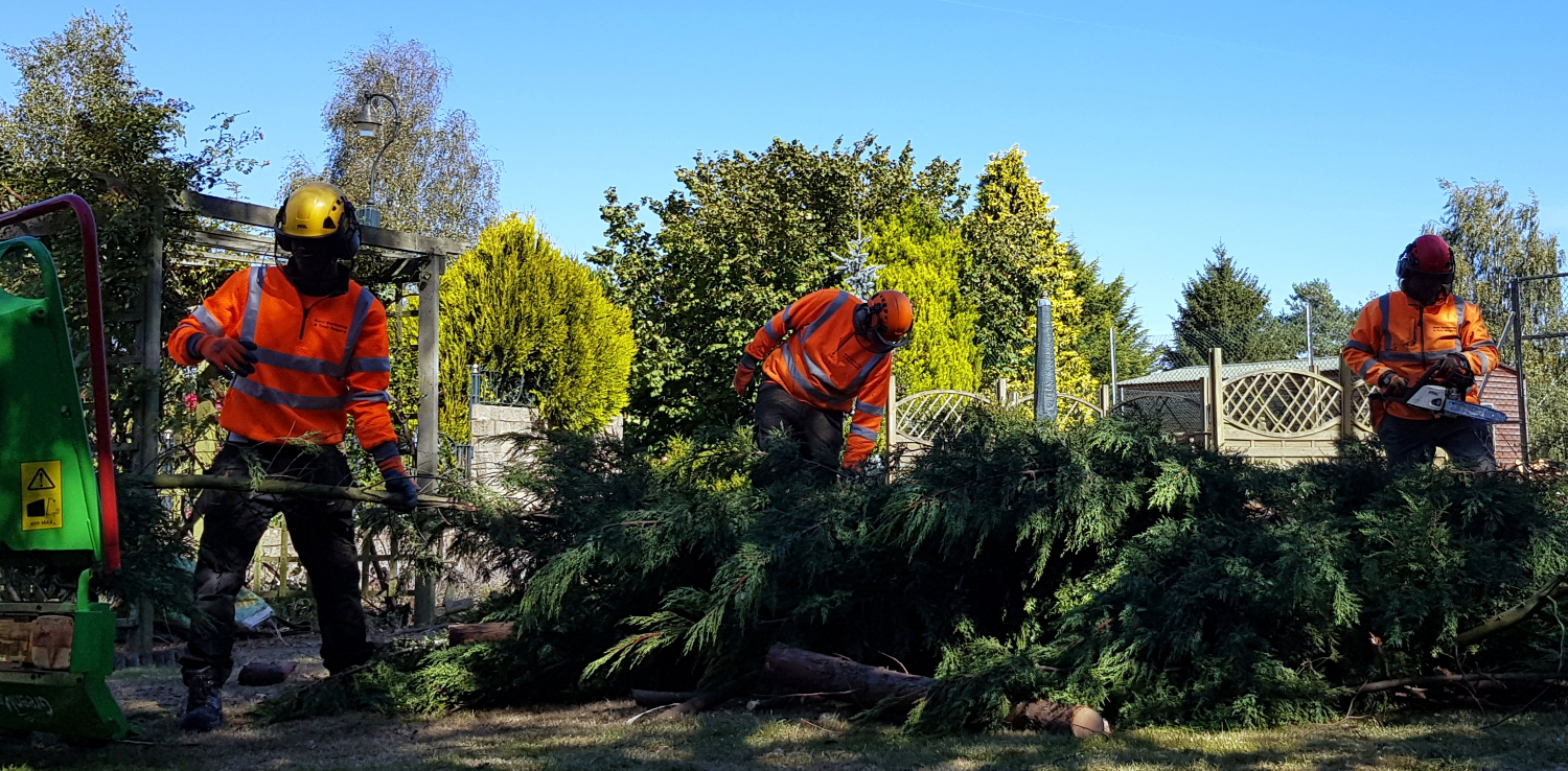 About Kent Gardening & Tree Surgery Limited