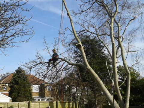 tree removal kent gardening tree surgery