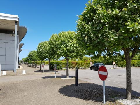 commercial site tree pruning trimming kent