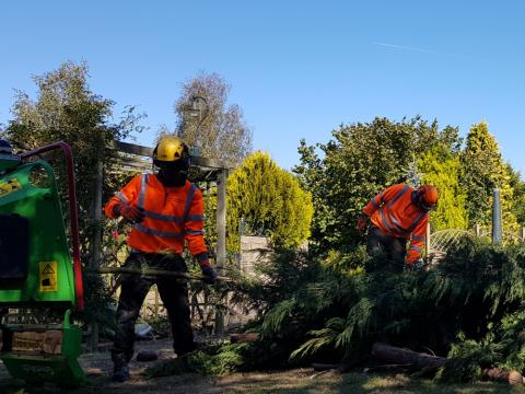 conifer removal chipping kent