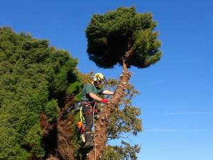 Explore our tree surgery services