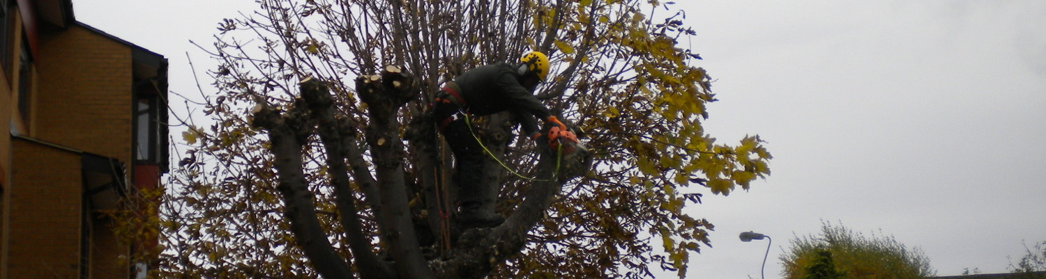 Tree Surgery in Kent