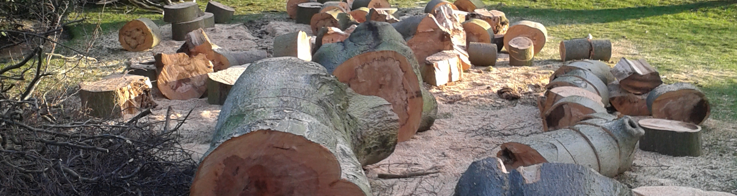 Tree Removal Kent